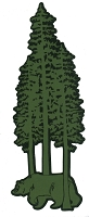V077-GRN Walking Bear in Giant Redwood Trees Vinyl Cutout Decal